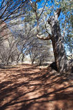 澳洲澳大利亚北澳洲内地领土 免版税库存图片