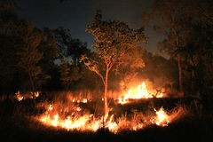 澳洲灌木中心火红色 免版税库存照片