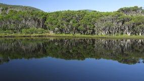 澳洲玉树森林湖 库存图片