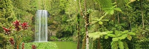 澳洲美丽的millaa全景瀑布 库存图片