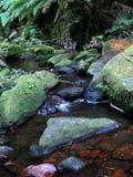 澳洲蓝色山国家公园科教文组织 免版税库存图片