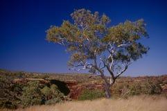 澳洲西部pilbara的区域 库存照片