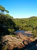 澳洲雨林 免版税库存照片