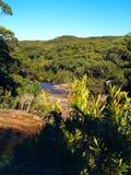 澳洲雨林 免版税库存图片