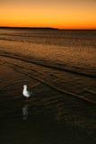 澳洲鸟fraser海岛日落科教文组织 免版税库存照片