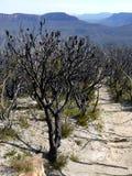 澳洲: 在bushfire以后的蓝色山 库存照片