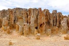 澳洲bridgewater被石化的海角森林 库存图片