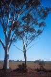 澳洲bushland 免版税库存照片