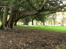 澳洲carlton庭院墨尔本 库存图片