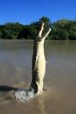 澳洲crocodille跳的kakadu 免版税图库摄影