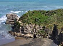 澳洲Gannet殖民地, Muriwai海滩,北岛,新西兰 图库摄影