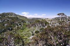 澳洲kosciusko国家公园 库存图片