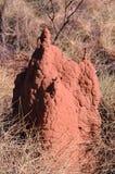 澳洲在内地土墩白蚁 库存照片
