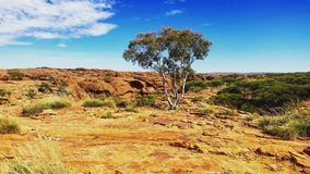 澳洲峡谷国王国家公园watarrka 库存图片