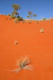 澳洲沙漠沙丘红色沙子 免版税库存照片