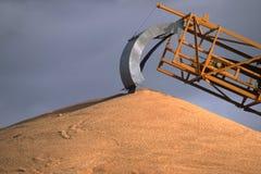 澳洲西部麦子 免版税库存图片