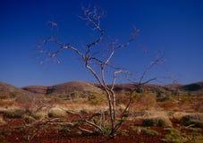 澳洲西部pilbara的区域 免版税库存照片
