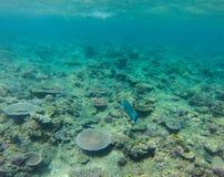 澳洲障碍极大的礁石 免版税库存照片