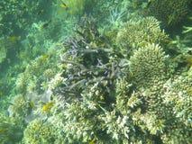 澳洲障碍珊瑚钓鱼极大的礁石 免版税库存图片