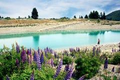 激动人心的景色,新西兰 免版税库存图片