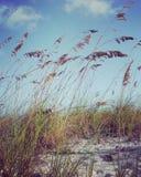 激动人心的海滩场面instagram我 库存照片