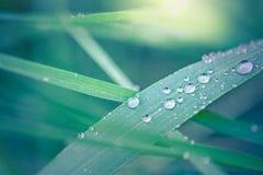 激动人心的自然背景,早晨在绿草,宏观自然的露滴 美好的特写镜头自然 库存照片