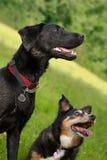 激动的狗 免版税库存图片