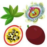 激情花蓝色热带水果maracuya传染媒介例证 库存图片