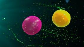 激活的T细胞和b细胞 皇族释放例证