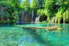 瀑布、池塘和被淹没的日志在克罗地亚` s Plitvice湖N 免版税库存照片