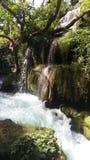 瀑布一条起泡的小河在树中的 库存照片