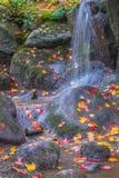 瀑布下落的秋叶 库存照片
