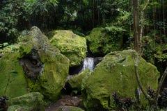 瀑布以与许多植物的非常密林绿色在巴厘岛印度尼西亚 免版税库存照片