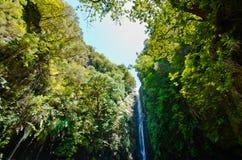 瀑布和天空在森林里,马德拉岛,葡萄牙 免版税库存图片