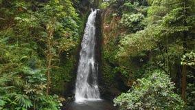 瀑布和密林在巴厘岛,印度尼西亚 伟大的瀑布鸟瞰图  股票视频