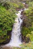 瀑布和小河在夏威夷的大岛 库存图片
