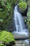 瀑布和小的鸟 免版税库存图片