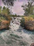 瀑布和森林跗骨火鸡的 库存照片