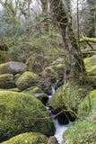 瀑布和生苔岩石在贝基落,德文郡 免版税库存照片