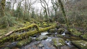 瀑布和生苔岩石在贝基落,德文郡 免版税库存图片