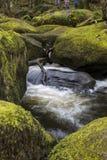 瀑布和生苔岩石在贝基落,德文郡 库存图片