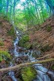 瀑布和绿色森林美丽如画的看法  免版税库存照片