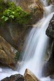 瀑布和蕨 库存照片