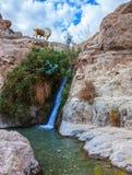 瀑布和迅速小河 免版税库存照片
