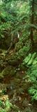 瀑布和雨林全景在Akaka下跌国家公园,夏威夷 免版税库存图片