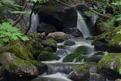 瀑布和青苔隐蔽的岩石 免版税库存图片