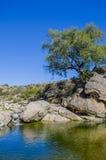 瀑布和结构树 免版税图库摄影