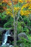瀑布和黄色树 免版税库存图片