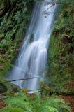瀑布在一个雨天在Goldstream公园,不列颠哥伦比亚省 免版税库存照片
