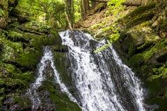 瀑布在喀尔巴阡山脉的森林里 免版税库存照片